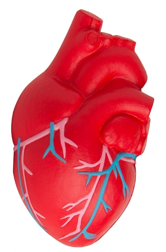 Anatomic Heart with Veins Stress Reliever